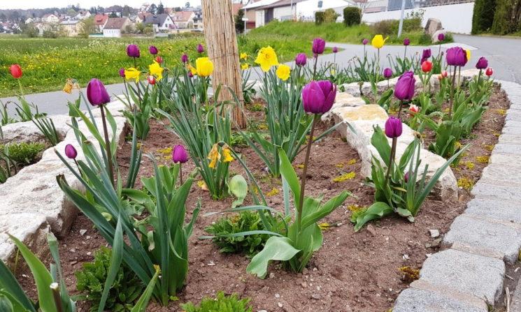 Farbexplosion im Frühling